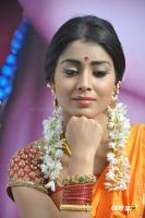 Shriya Photos in Pavithra (11)