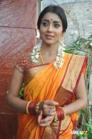 Shriya Photos in Pavithra (23)