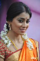 Shriya Photos in Pavithra (8)