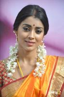 Shriya Photos in Pavithra (9)