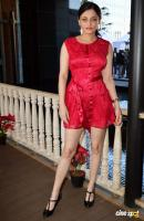Sneha Ullal at Harvey India's Christmas Brunch (4)